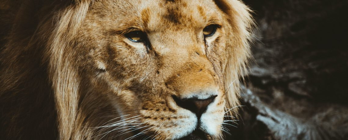 Lesson Audio – Mark Day – Stopping the Mouths of Lions