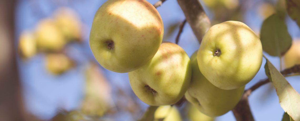 Lesson Audio – Mark Day – Should I Leave My Fruitfulness