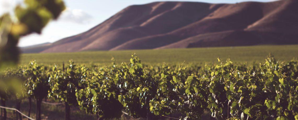 Lesson Audio – Mark Day – I am the True Vine