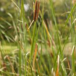 Lesson Audio -Mark Day – Reeds Shaken by the Wind